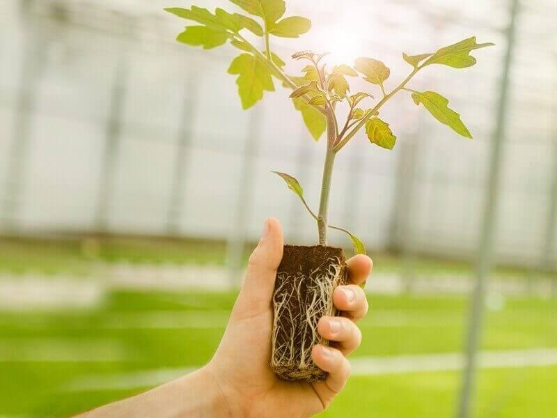 Noordam Plants